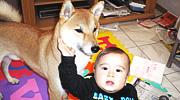 愛犬「武蔵」のイメージ